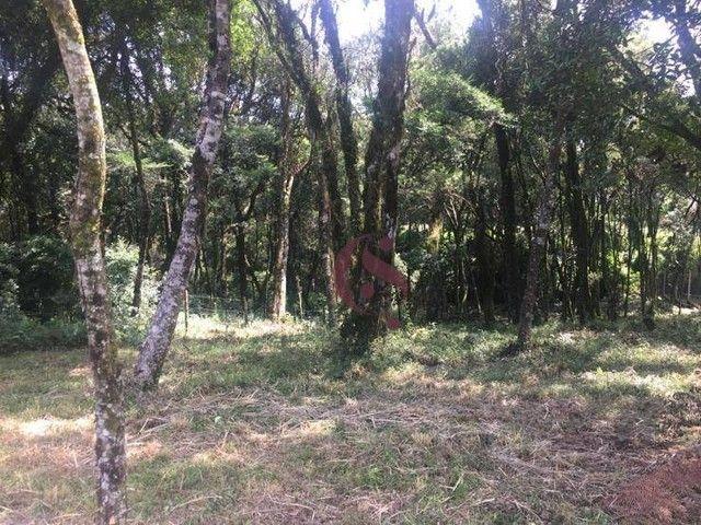 Terreno à venda no Jardim Mariana em Canela/RS - Foto 3
