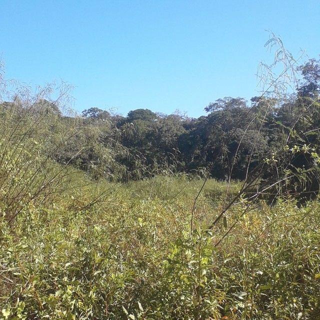 Sítio 118 hectares em coqueiral