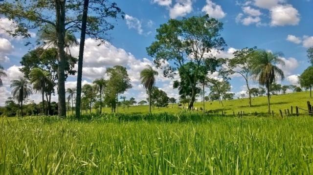 Fazenda em FORMOSA - GO, p/ Pecuária  - Foto 13