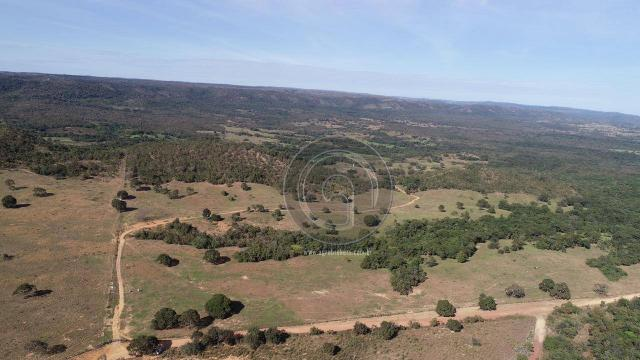 Fazenda 1.050ha região rosario oeste (cedral) - Foto 6