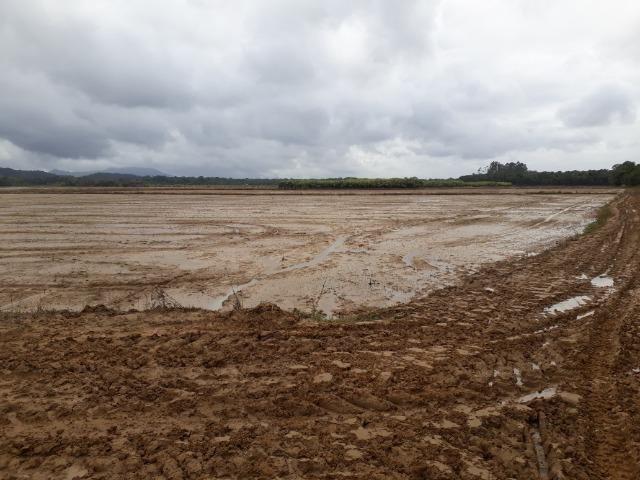 Fazenda Linda para Plantio de Arroz, Aceita parte Parcelado - Foto 12