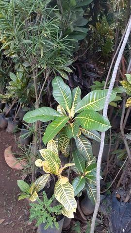 Samuel plantas  - Foto 6