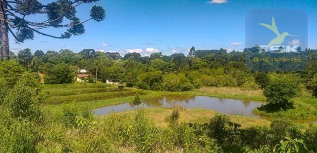 CH0266 - Chácara, 68.000 m² à venda por R$430.000. Agudos do Sul/PR. - Foto 20