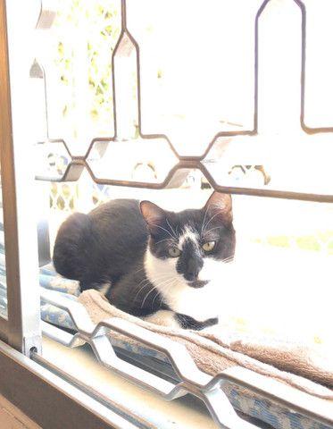 Gato Adoção Doação - Foto 4