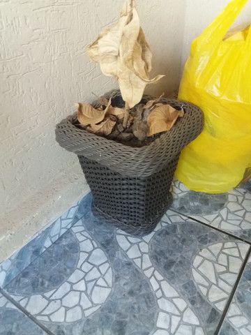 Vazos de Planta! - Foto 2