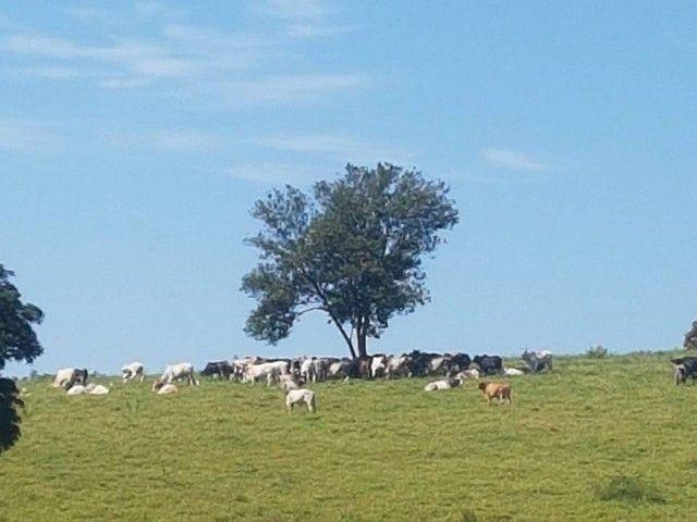 Fazenda/Sítio/Chácara para venda tem 1100000 metros quadrados - Foto 11