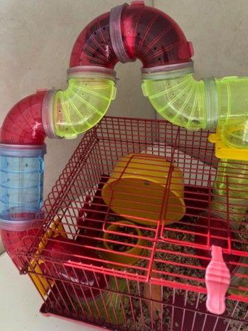 Gaiola Para Hamster Com Tubos De Luxo  + bola de exercícios - Foto 3