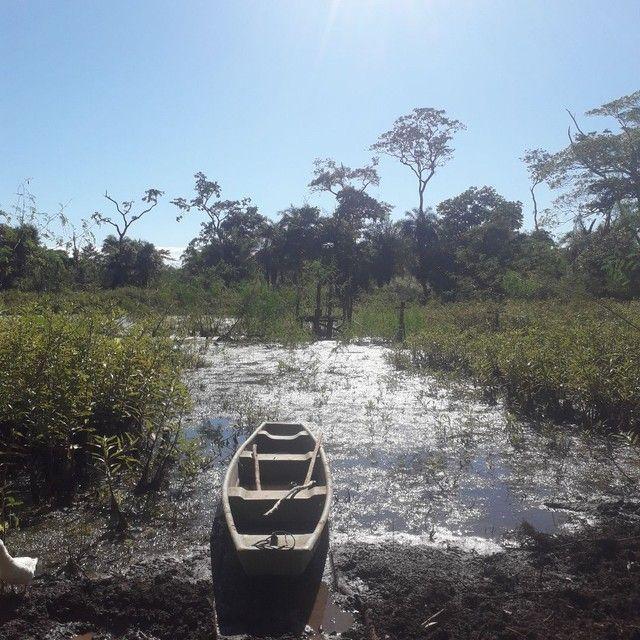 Sítio 118 hectares em coqueiral  - Foto 6