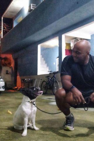 Adestramento Canino - Foto 5