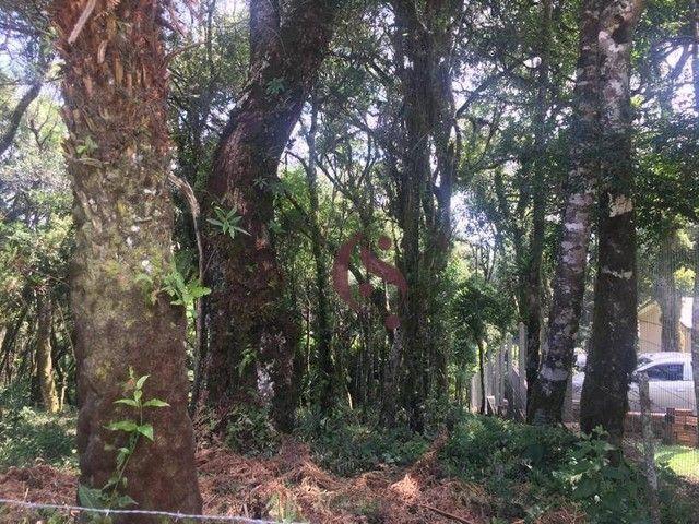 Terreno à venda no Jardim Mariana em Canela/RS - Foto 12