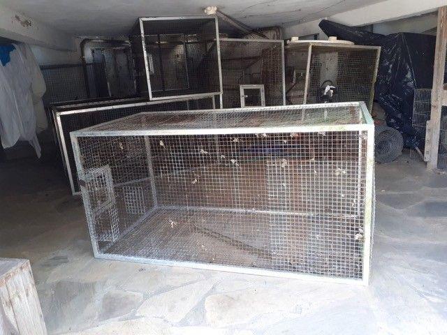 Gaiola/Viveiro galvanizada, acabamento alumínio, tenho várias  - Foto 3