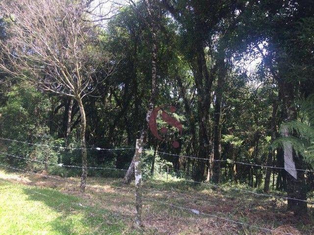 Terreno à venda no Jardim Mariana em Canela/RS - Foto 5