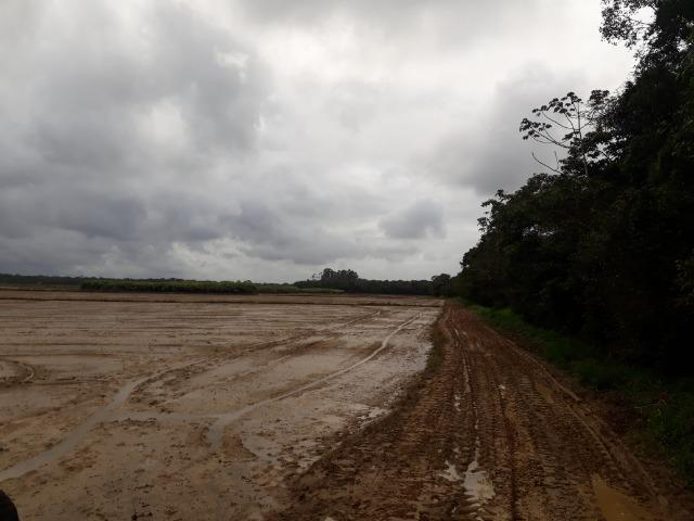 Fazenda Linda para Plantio de Arroz, Aceita parte Parcelado - Foto 8
