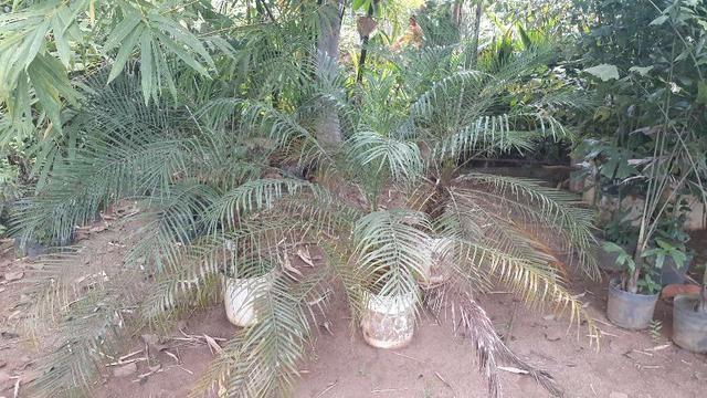 Samuel plantas