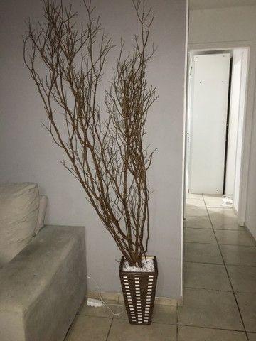 Planta seca  - Foto 3