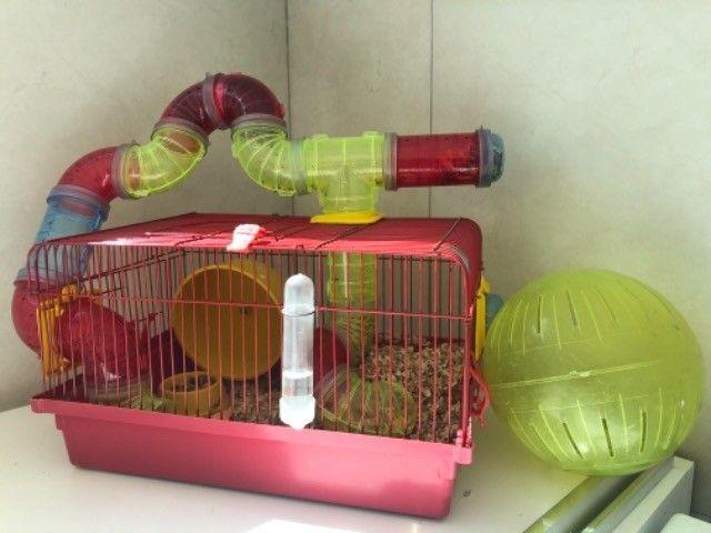Gaiola Para Hamster Com Tubos De Luxo  + bola de exercícios