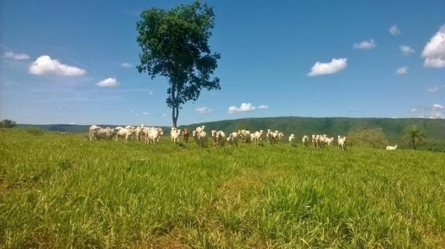 Fazenda em FORMOSA - GO, p/ Pecuária