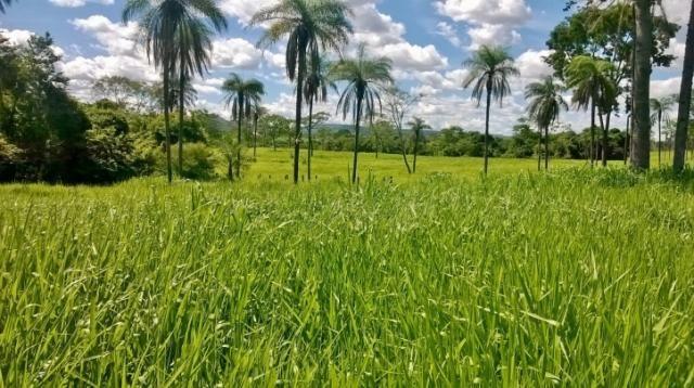 Fazenda em FORMOSA - GO, p/ Pecuária  - Foto 14