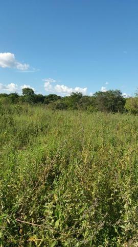 215A/Fazenda de 485 ha com outorga para irrigação às margens do Rio São Francisco - Foto 14