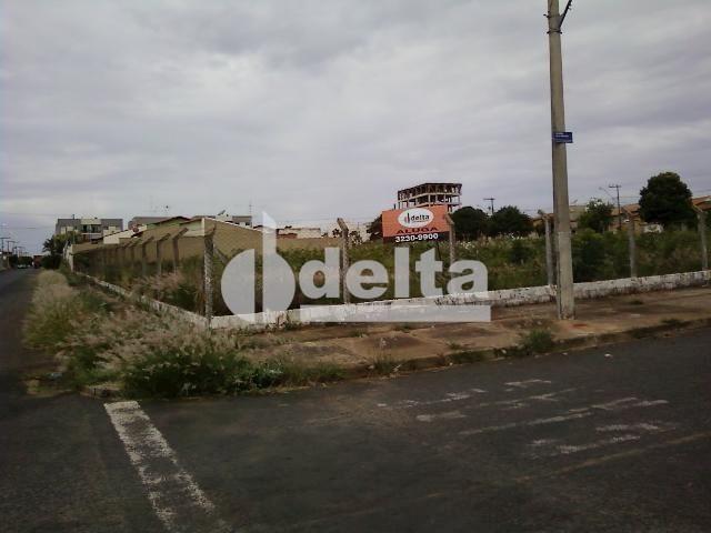 Terreno para alugar em Segismundo pereira, Uberlândia cod:221457 - Foto 2