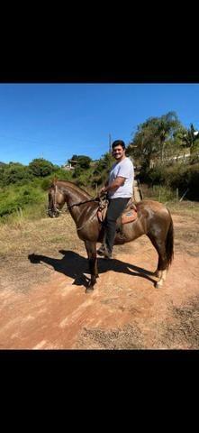 Égua MM prenha - Foto 3