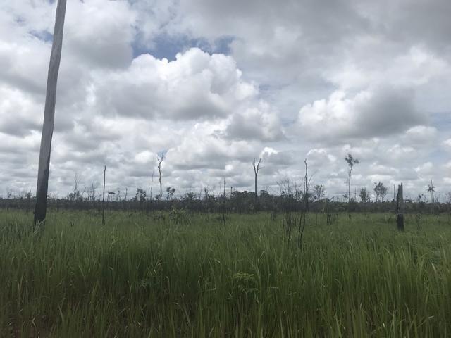 Vendo área de fazenda na Br 319 AM próximo a Porto Velho/Ro - Foto 15
