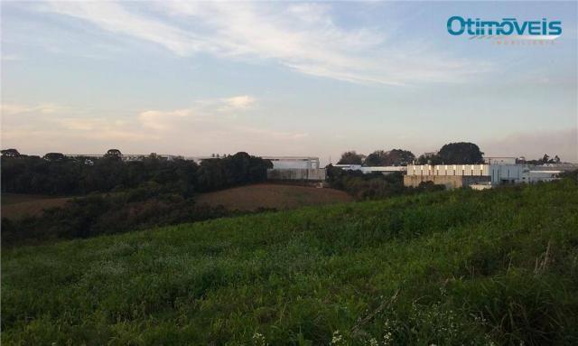 Área à venda, colônia zacarias, são josé dos pinhais - ar0002. - Foto 11