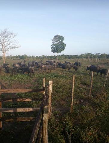 Venda de terreno rural