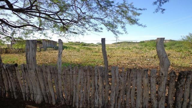 Fazenda Fernando Pedrosa, 489 Hectares, Escriturada, 7km Rio Pajeú, Açude, Casa Sede - Foto 18