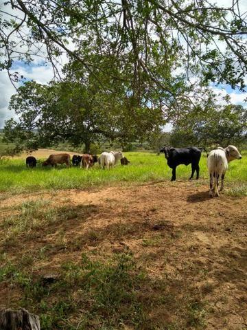 Fazenda em Ribeira do Pombal - Foto 16