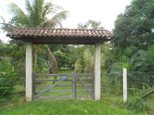 Caetano Imóveis - Sítio todo arborizado, plano e com acesso asfaltado (confira!) - Foto 9