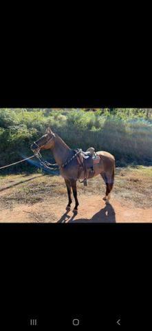 Égua MM prenha - Foto 2