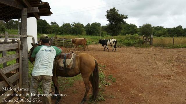 Fazenda em Porangatu!! - Foto 8
