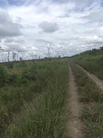 Vendo área de fazenda na Br 319 AM próximo a Porto Velho/Ro - Foto 6