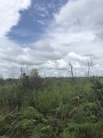 Vendo área de fazenda na Br 319 AM próximo a Porto Velho/Ro - Foto 12