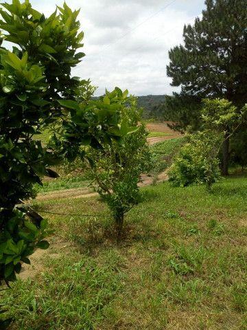 Chácara Linda na Fazenda Rio Grande PR - Foto 10