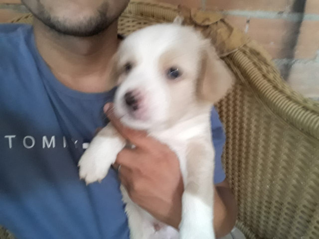 Vendo poodle - Foto 4
