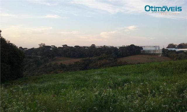 Área à venda, colônia zacarias, são josé dos pinhais - ar0002. - Foto 8