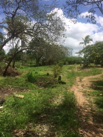 Fazenda-Granja-Sítio-Chácara 12 Hectares Aliança, Aceito Imóvel ou Automóvel - Foto 12