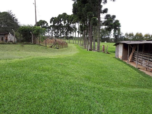 Chácara Tijucas do Sul (Tabatinga) - Foto 11
