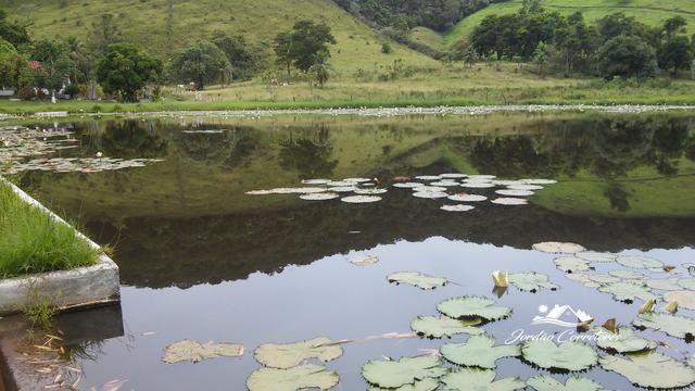 Jordão corretores - Fazendinha leiteira Cachoeiras de Macacu - Foto 7
