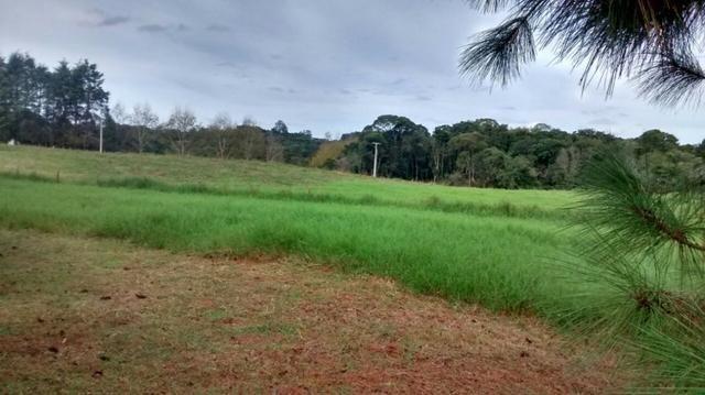 Chácara Tijucas do Sul (Tabatinga) - Foto 5