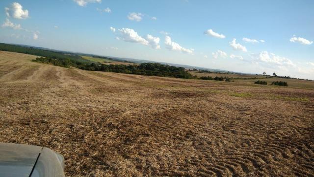 234 Hectares - 97 Alqueires - Planta 52 Alqueires - Palmeira - Foto 5