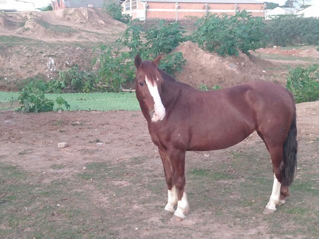 Vendo Égua Confirmada - Foto 2