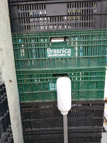 Caixas plástica para verduras! - Foto 6