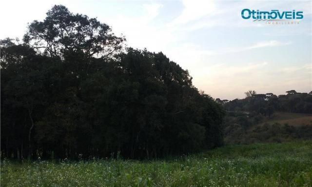 Área à venda, colônia zacarias, são josé dos pinhais - ar0002. - Foto 10
