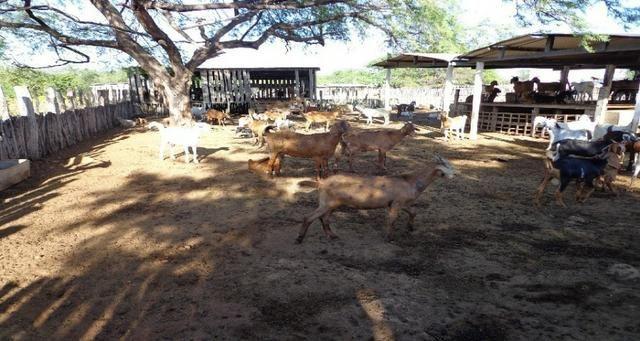 Fazenda Fernando Pedrosa, 489 Hectares, Escriturada, 7km Rio Pajeú, Açude, Casa Sede - Foto 5
