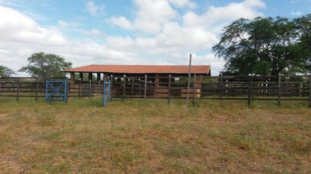 Fazenda Fernando Pedrosa, 489 Hectares, Escriturada, 7km Rio Pajeú, Açude, Casa Sede - Foto 16