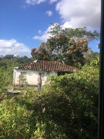 Fazenda - Barro Preto - Foto 4