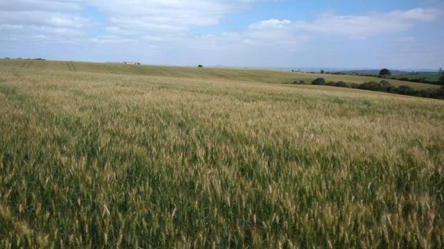 580 Hectares - 240 Alqueires - Fazenda Sede - Lapa - Foto 6